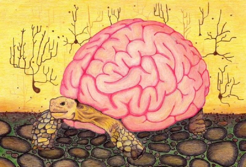 """1 atalhos mentais - 13 - """"Heurísticas"""": Os atalhos mentais do pensamento humano"""