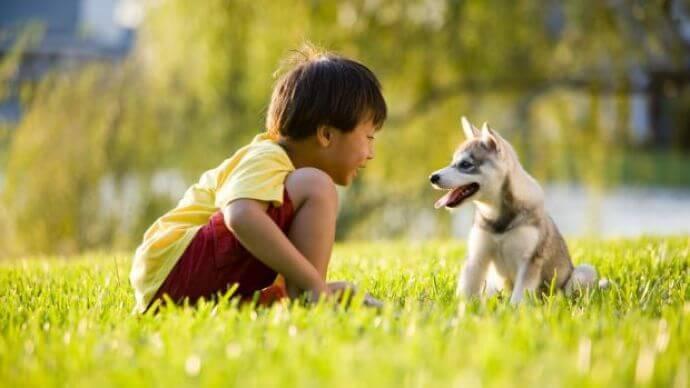 autismo - img 56997fef5176b - Autismo e animais de estimação: mais provas de benefícios sociais