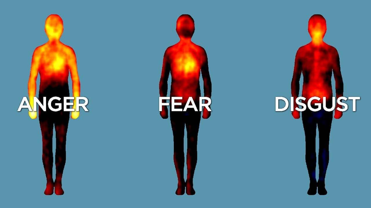 1 o corpo - 1 6 - O Corpo e as Emoções