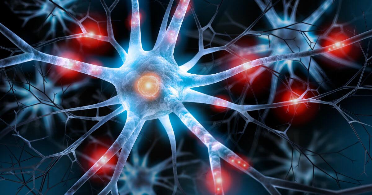 1 neurogênese - 1 14 - Neurogênese: como novos neurônios são formados?